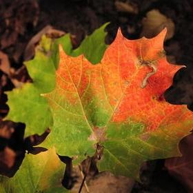 Autumn - Watch the Leaves Change Color - Bucket List Ideas