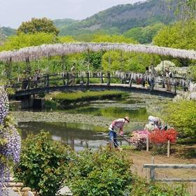 Visit Ashikaga Flower Park in Japan - Bucket List Ideas