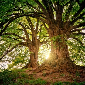 Plant at least 100 trees - Bucket List Ideas