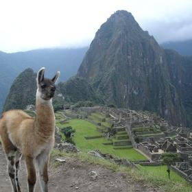 Take a Selfie with a Llama at Machu Picchu - Bucket List Ideas