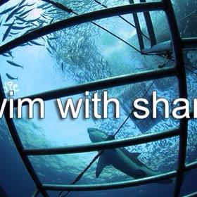 Shark cage dive - Bucket List Ideas