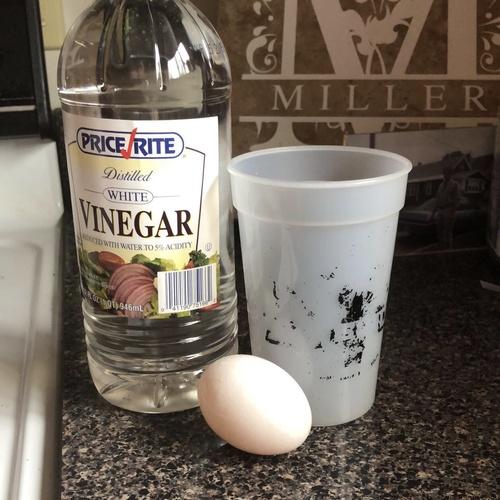 Do the egg in Vinegar experiment - Bucket List Ideas