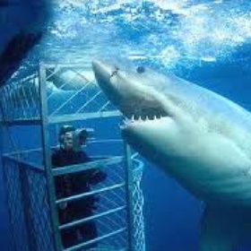 Be in a submersible cage as Great Whites swim around - Bucket List Ideas