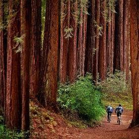 See the redwoods - Bucket List Ideas