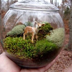 Make a cool terrarium - Bucket List Ideas