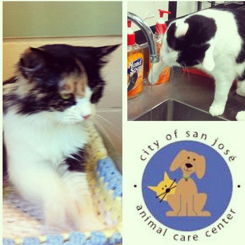 Bucketlist » Volunteer at an animal shelter (Official Bucket List)