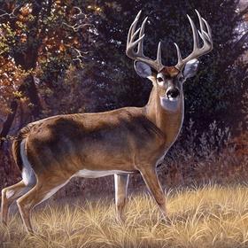 Shoot an 8-point Buck (or larger) - Bucket List Ideas