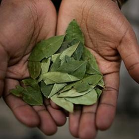 Chew Coca leaves - Bucket List Ideas