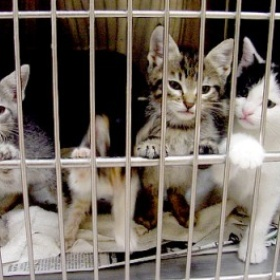 Rescue an animal from an animal shelter - Bucket List Ideas