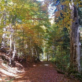 Go to National Nature Reserve Boubínský prales in Šumava - Bucket List Ideas