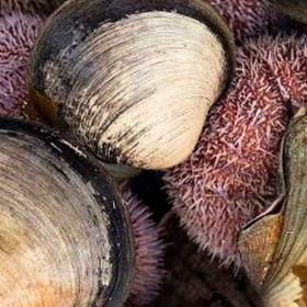 Catch and eat a sea urchin - Bucket List Ideas
