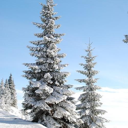 Experience a white Christmas - Bucket List Ideas