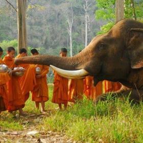 Volunteer at The Elephant Sanctuary, Cambodia - Bucket List Ideas