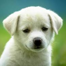Get a dog! - Bucket List Ideas