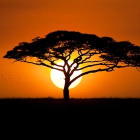 Experience a sunrise in Serengeti, Tanzania - Bucket List Ideas