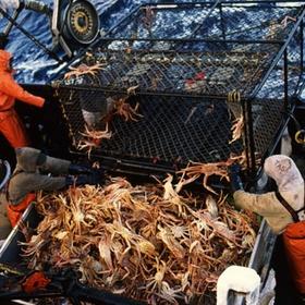 Go crabfishing on berrings sea - Bucket List Ideas