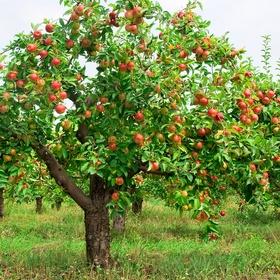 PLANT an APPLE TREE - Bucket List Ideas