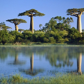 Go to Madagascar - Bucket List Ideas