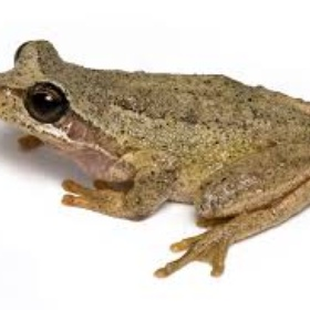 Overcome my phobia of frogs - Bucket List Ideas