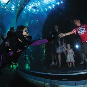 Dive in an Aquarium - Bucket List Ideas