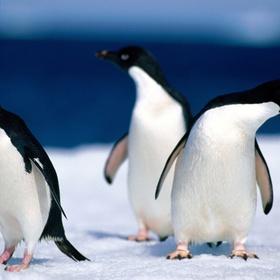 Visit wild penguins in their natural habitat - Bucket List Ideas