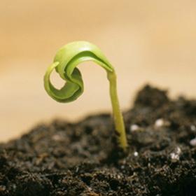 Grow a plant from a seed - Bucket List Ideas