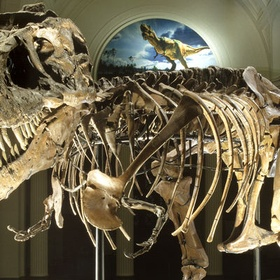 See Sue the T-Rex - Bucket List Ideas