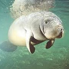 Trek Manatees - Bucket List Ideas