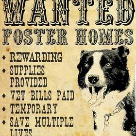 Be An Animal Foster - Bucket List Ideas
