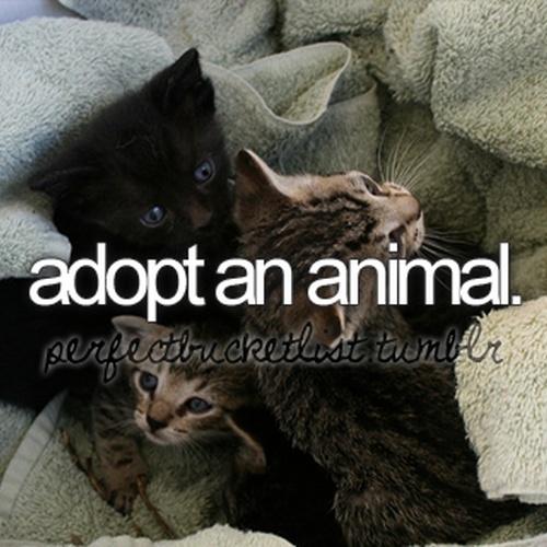 Adopt a Pet - Bucket List Ideas