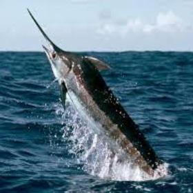 Catch a Marlin Fish - Bucket List Ideas