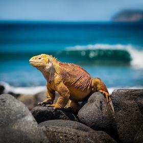 Go kayaking in the Galápagos Islands - Bucket List Ideas