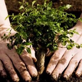 Plant a Tree and Watch it Grow - Bucket List Ideas
