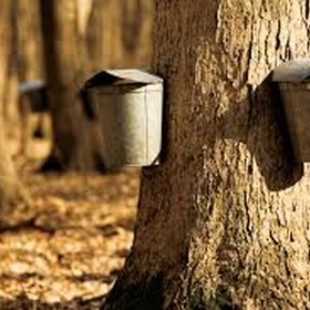 Go maple sugaring - Bucket List Ideas