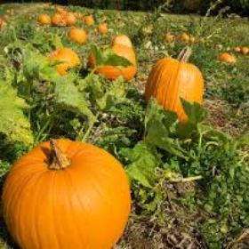 Grow my own Pumpkins for Halloween - Bucket List Ideas