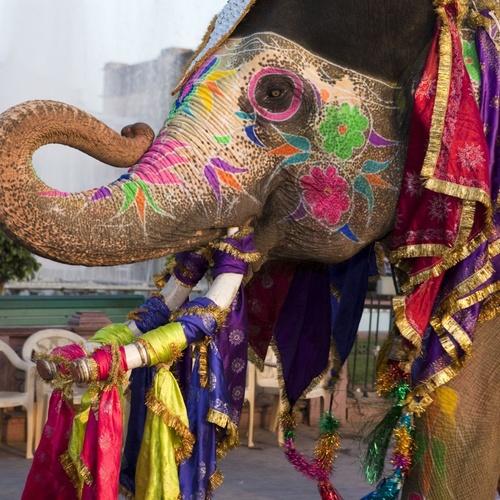 Go to India - Bucket List Ideas