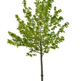 Plant my own tree and watch it grow - Bucket List Ideas