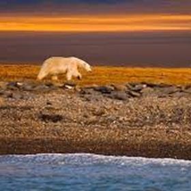Russia Wrangel Island - Bucket List Ideas