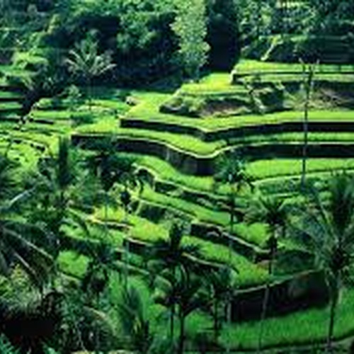 Visit Bali - Bucket List Ideas