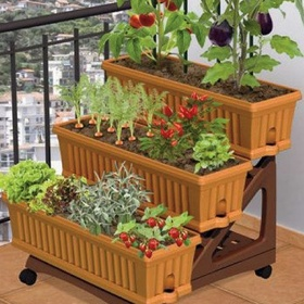 Grow my own fruit and vegetables! 🍒🌶🌽🍑🍍🍆 - Bucket List Ideas