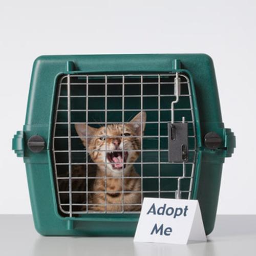 Adopt a cat - Bucket List Ideas