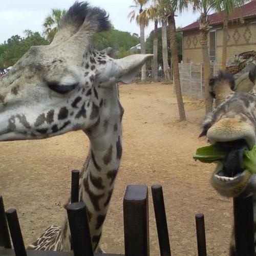 Feed a giraffe - Bucket List Ideas