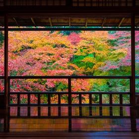 Visit Rurikoin Temple in Kyoto, Japan - Bucket List Ideas