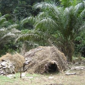 Visit Dja Faunal Reserve - Bucket List Ideas