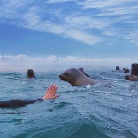 Swim with Sealions - Bucket List Ideas