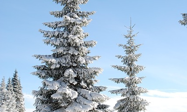 Experience a white Christmas - Bucket List Ideas