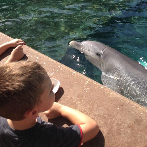 Feed Dolphins - Bucket List Ideas