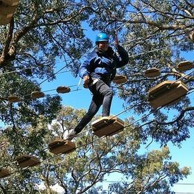 Tree Surfing in Arthurs Seat - Bucket List Ideas