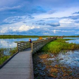Visit Myakka River State Park, FL - Bucket List Ideas
