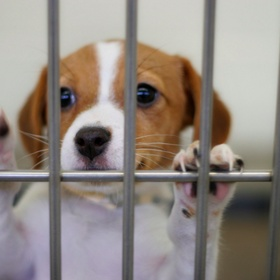 Donate to an Animal Shelter - Bucket List Ideas
